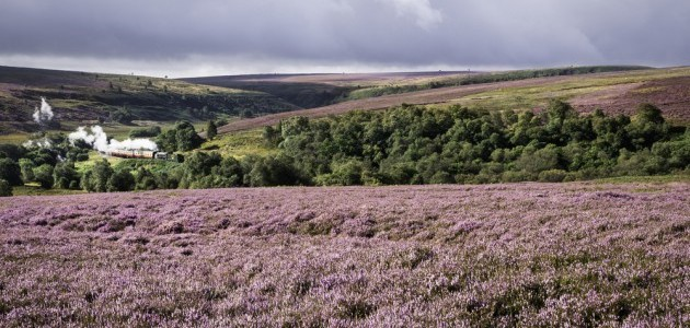 The North York Moors – A Place of Timelessness and Beauty