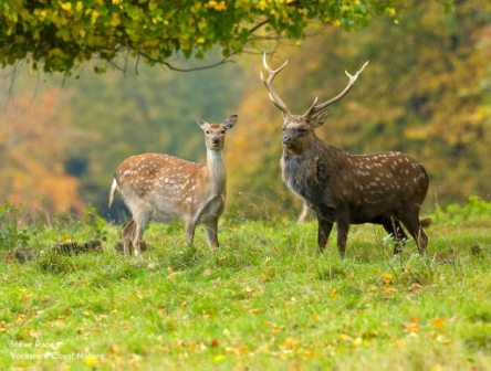 holiday experience in Yorkshire with deer