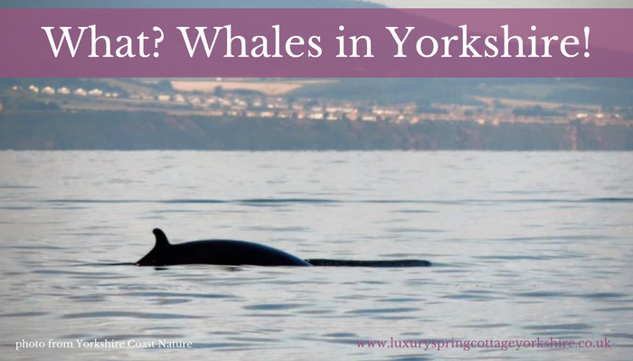 Whale Watching In Yorkshire