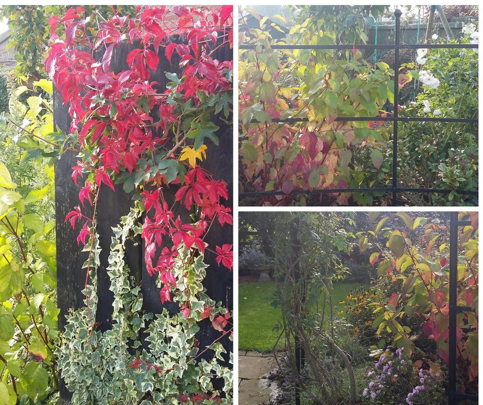 Cottage Garden In Autumn