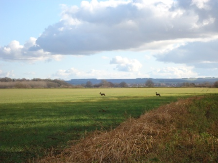 Family Friendly Walk near Malton deer spotting