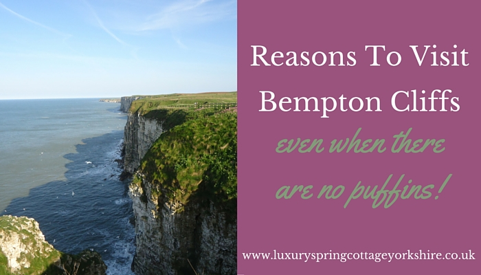 Reasons To Visit Bempton Cliffs Even When There Are No Puffins