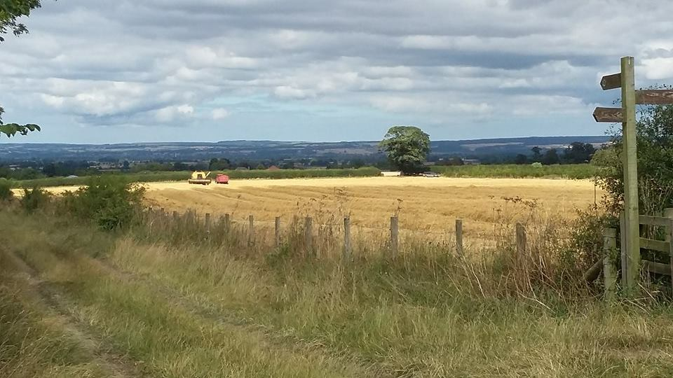Ryedale Countryside