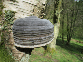 Fungi of the North York Moors